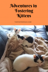 Adventures in Fostering Kittens